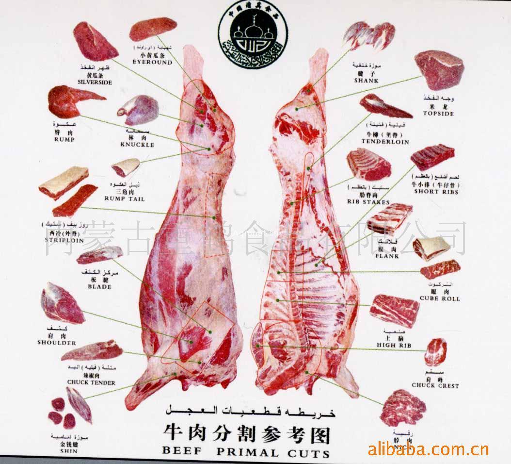 猪的关节结构图及作用